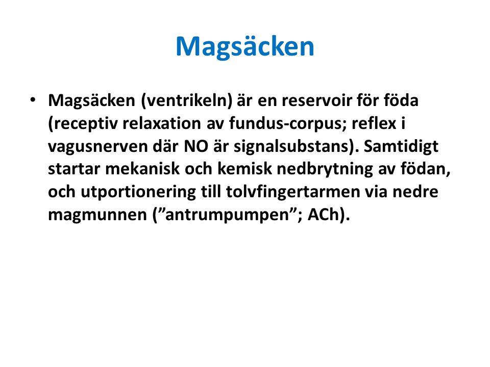 Magsäcken Magsäcken (ventrikeln) är en reservoir för föda (receptiv relaxation av fundus-corpus; reflex i vagusnerven där NO är signalsubstans). Samti