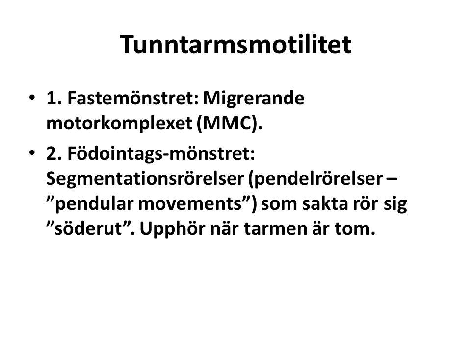 """Tunntarmsmotilitet 1. Fastemönstret: Migrerande motorkomplexet (MMC). 2. Födointags-mönstret: Segmentationsrörelser (pendelrörelser – """"pendular moveme"""