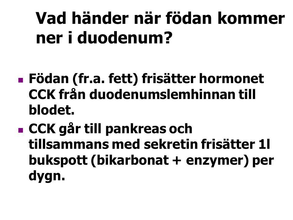 Vad händer när födan kommer ner i duodenum? Födan (fr.a. fett) frisätter hormonet CCK från duodenumslemhinnan till blodet. CCK går till pankreas och t