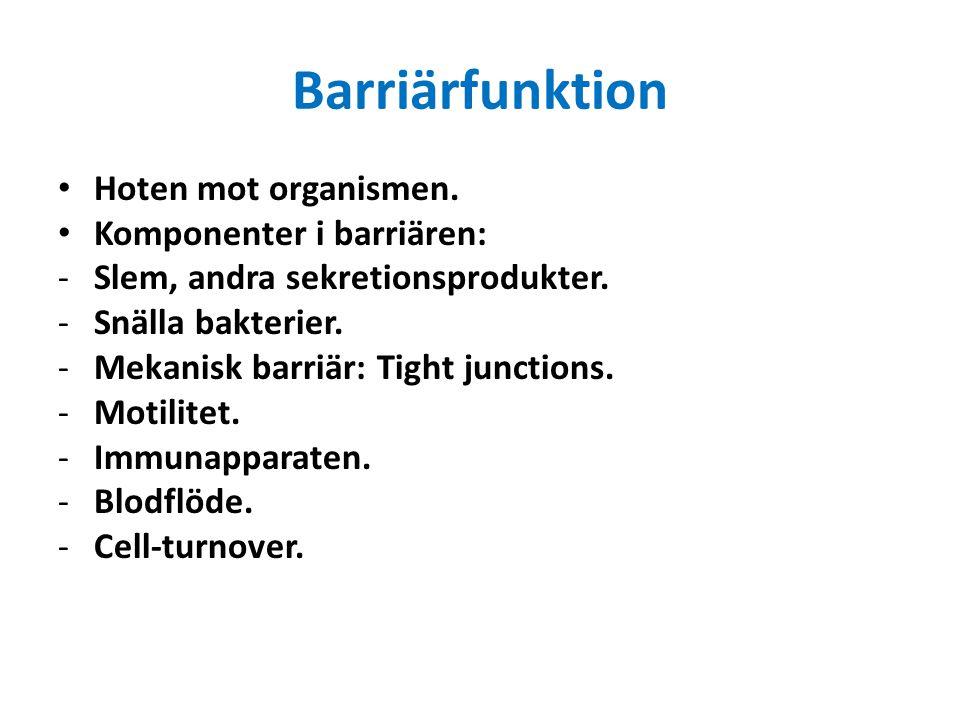 Barriärfunktion Hoten mot organismen. Komponenter i barriären: -Slem, andra sekretionsprodukter. -Snälla bakterier. -Mekanisk barriär: Tight junctions