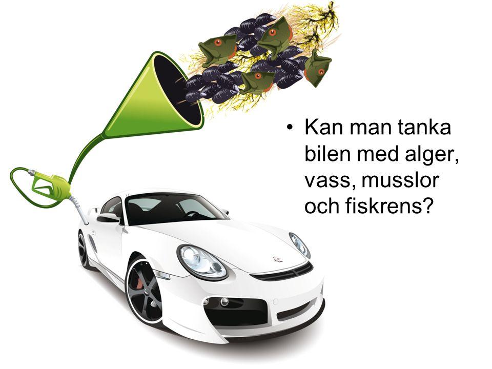 Kan man tanka bilen med alger, vass, musslor och fiskrens?