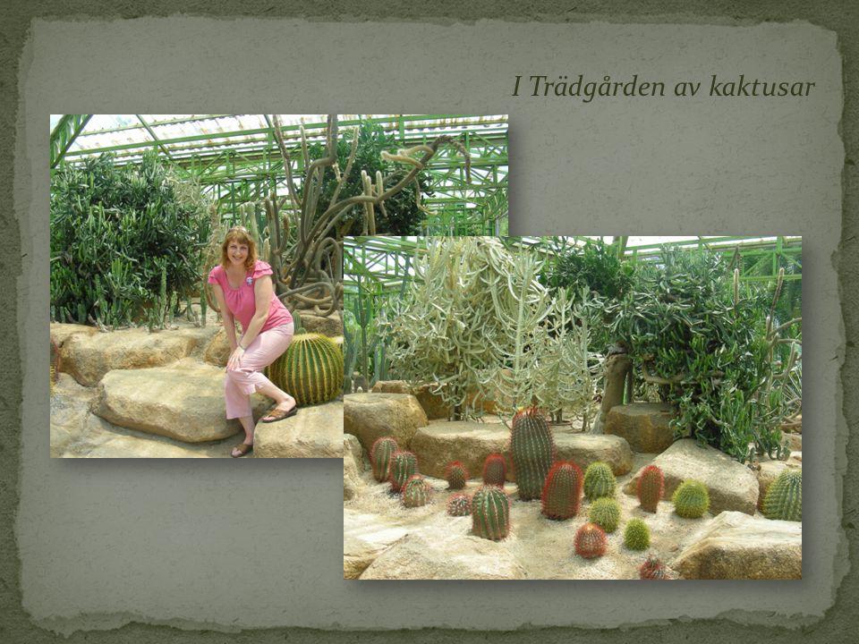 I Trädgården av kaktusar