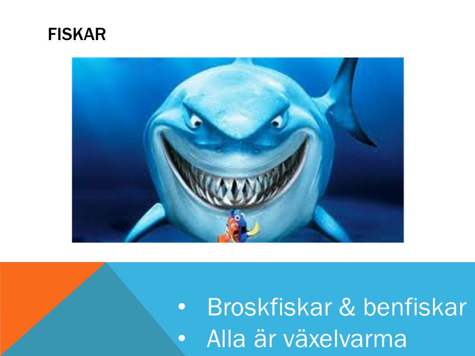 FISKAR Broskfiskar & benfiskar Alla är växelvarma