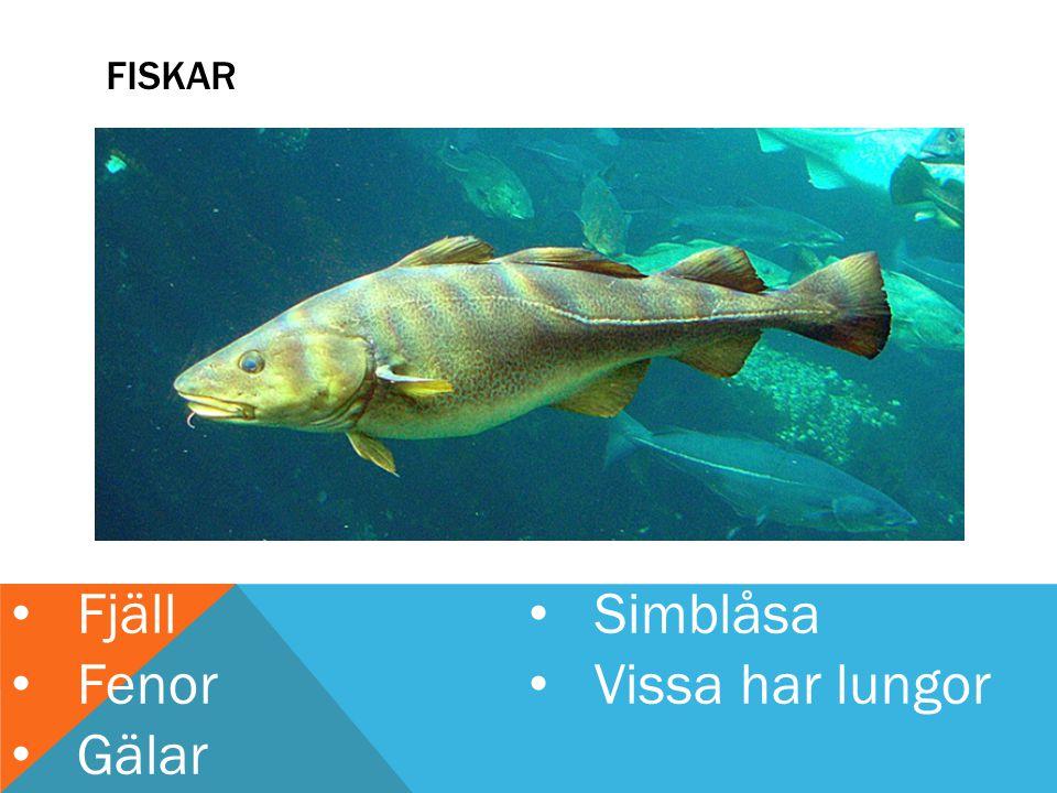 FISKAR Fjäll Fenor Gälar Simblåsa Vissa har lungor