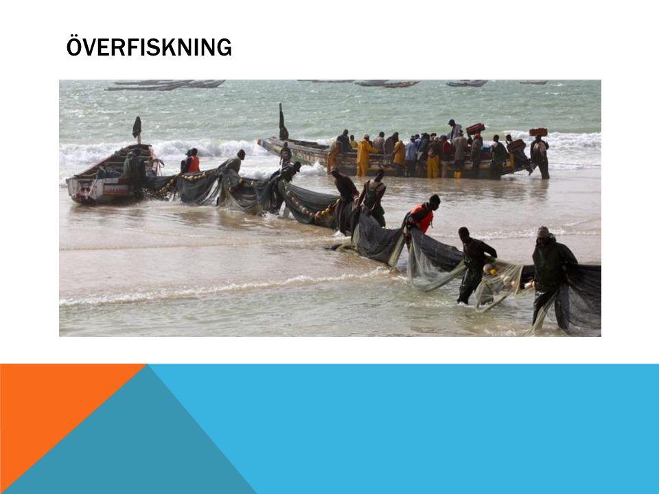 DISKUSSION Vad kan man göra för att stoppa överfiskningen.