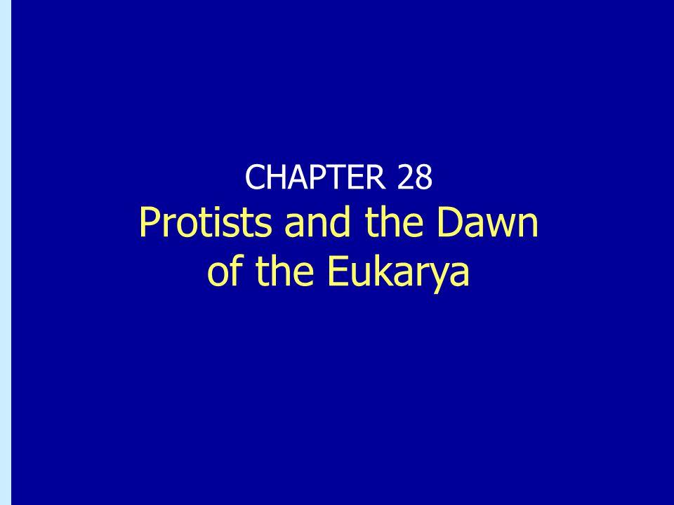 Chapter 27: Protists and the Dawn of the Eukarya Den eukaryota cellen Intracellulära avdelningar separerade av membranIntracellulära avdelningar separerade av membran  Membranomgiven kärna som innehåller DNA  Organeller och specialiserade vesikler (peroxisomer, lysosomer, mitokondrier, kloroplaster, Golgiapparat, ER) CytoskelettCytoskelett
