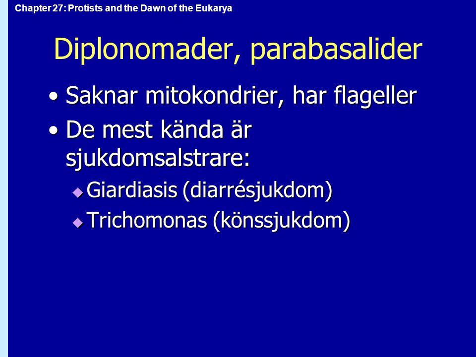 Chapter 27: Protists and the Dawn of the Eukarya Diplonomader, parabasalider Saknar mitokondrier, har flagellerSaknar mitokondrier, har flageller De m