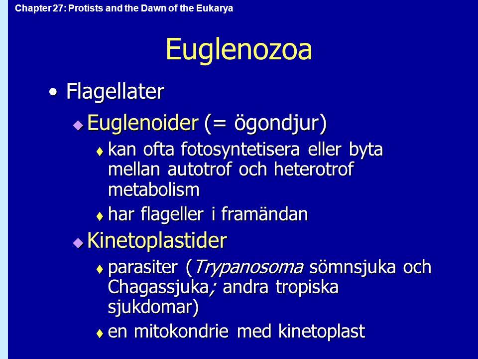 Chapter 27: Protists and the Dawn of the Eukarya Euglenozoa FlagellaterFlagellater  Euglenoider (= ögondjur)  kan ofta fotosyntetisera eller byta me