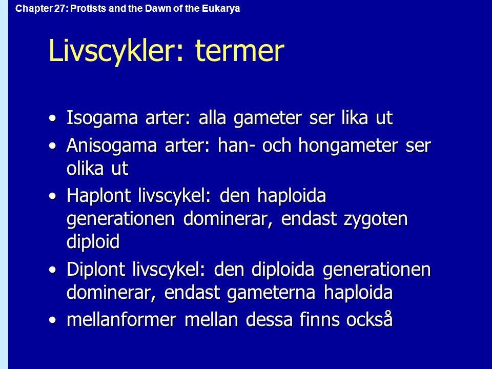 Chapter 27: Protists and the Dawn of the Eukarya Livscykler: termer Isogama arter: alla gameter ser lika utIsogama arter: alla gameter ser lika ut Ani