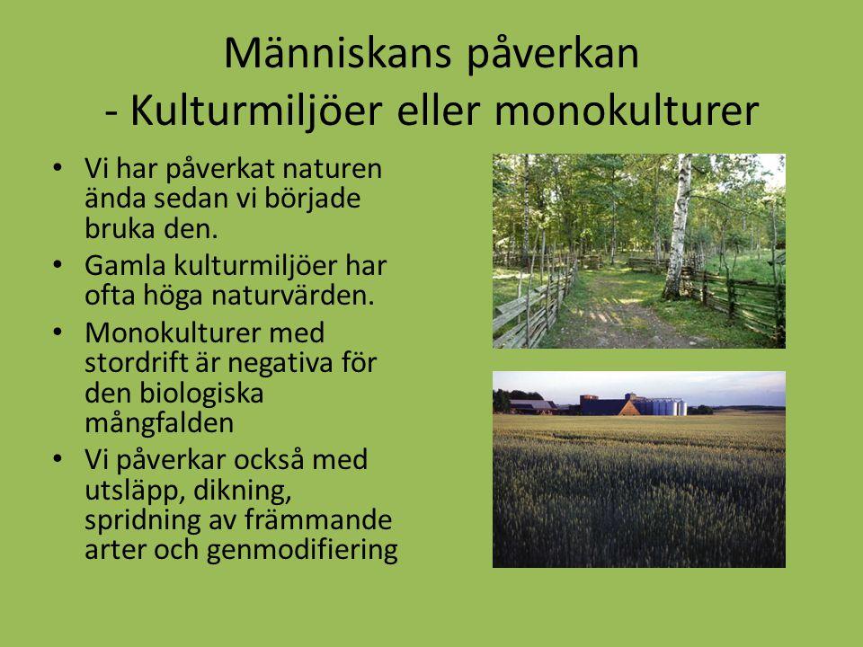 Människans påverkan - Kulturmiljöer eller monokulturer Vi har påverkat naturen ända sedan vi började bruka den. Gamla kulturmiljöer har ofta höga natu