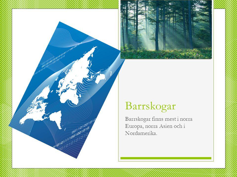 Barrskogar Barrskogar finns mest i norra Europa, norra Asien och i Nordamerika.