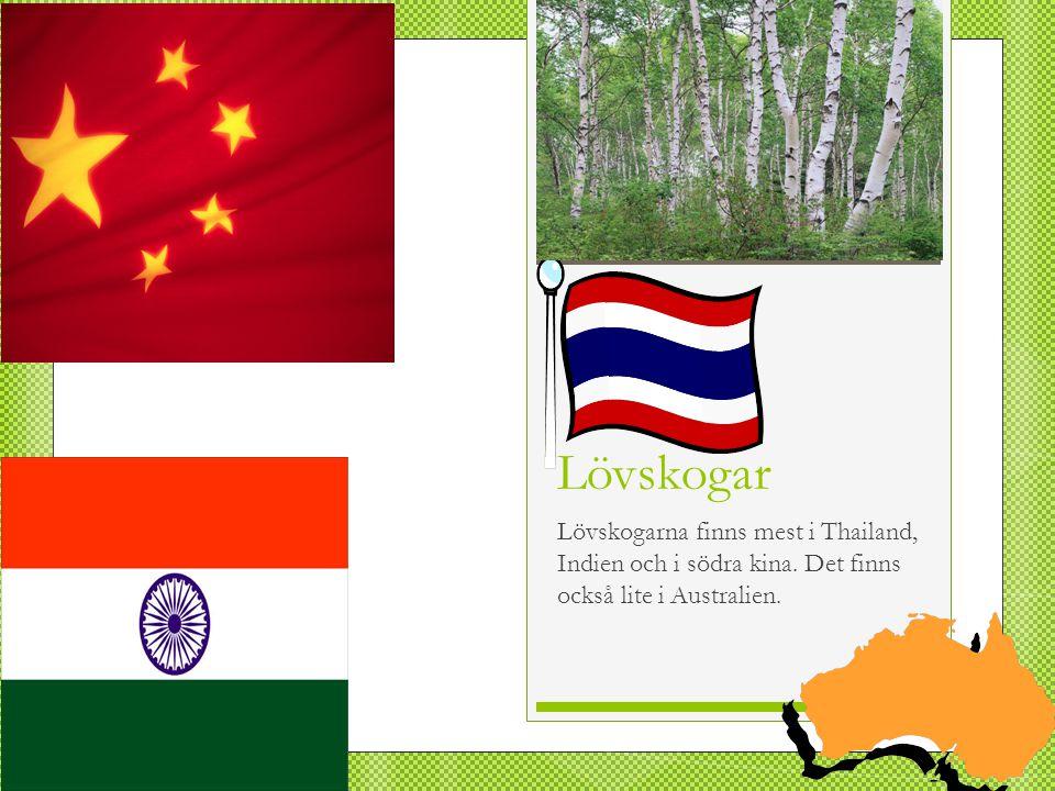 Lövskogar Lövskogarna finns mest i Thailand, Indien och i södra kina. Det finns också lite i Australien.