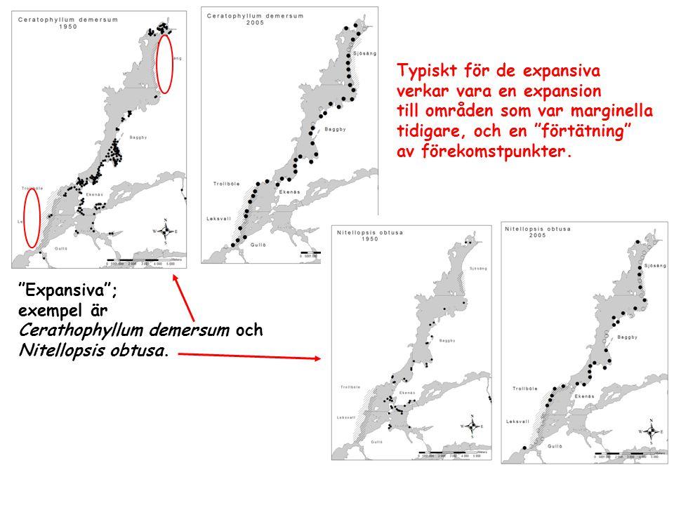 """""""Expansiva""""; exempel är Cerathophyllum demersum och Nitellopsis obtusa. Typiskt för de expansiva verkar vara en expansion till områden som var margine"""
