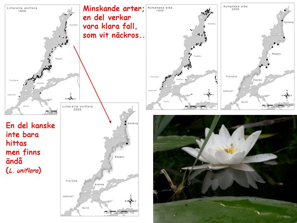 Minskande arter; en del verkar vara klara fall, som vit näckros..