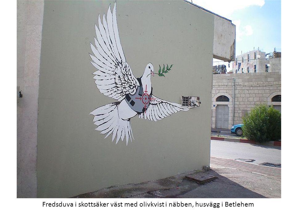 Fredsduva i skottsäker väst med olivkvist i näbben, husvägg i Betlehem