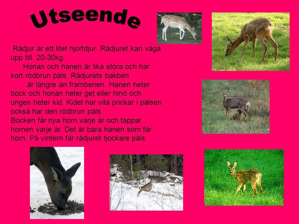 Rådjuret finns i hela Sverige utom i fjällområden.