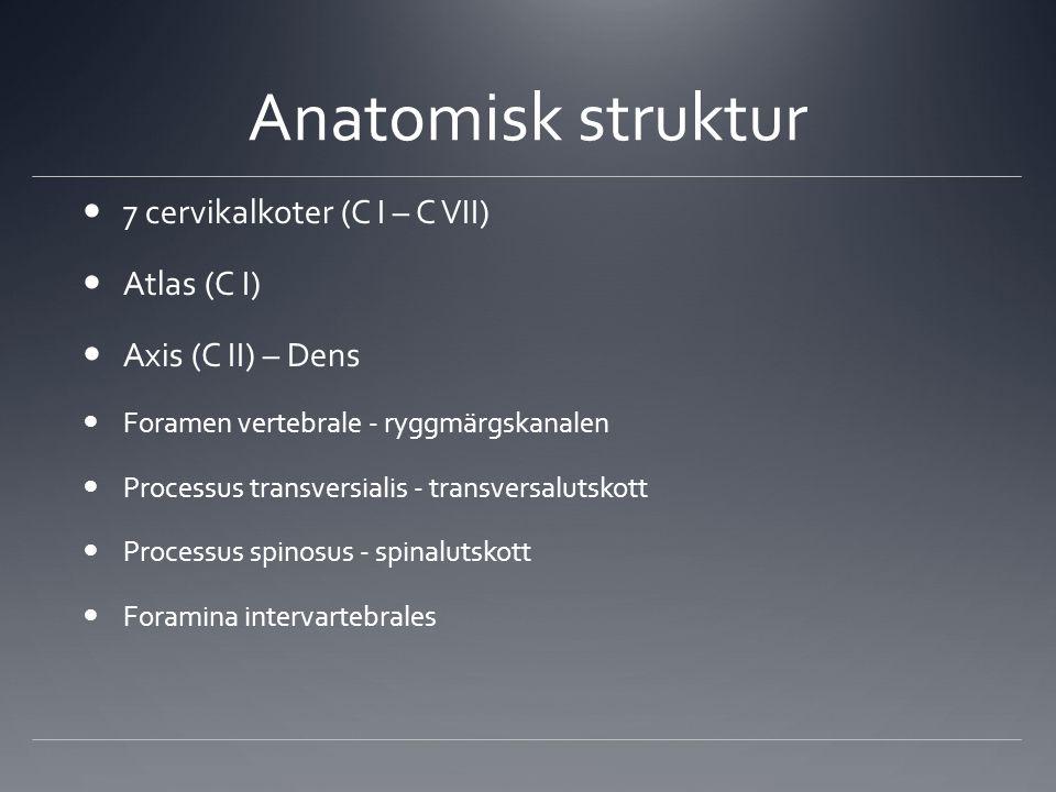 Anatomisk struktur 7 cervikalkoter (C I – C VII) Atlas (C I) Axis (C II) – Dens Foramen vertebrale - ryggmärgskanalen Processus transversialis - trans