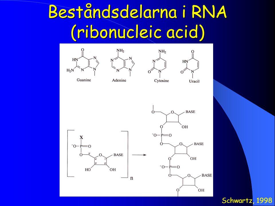 Beståndsdelarna i RNA (ribonucleic acid) Schwartz, 1998