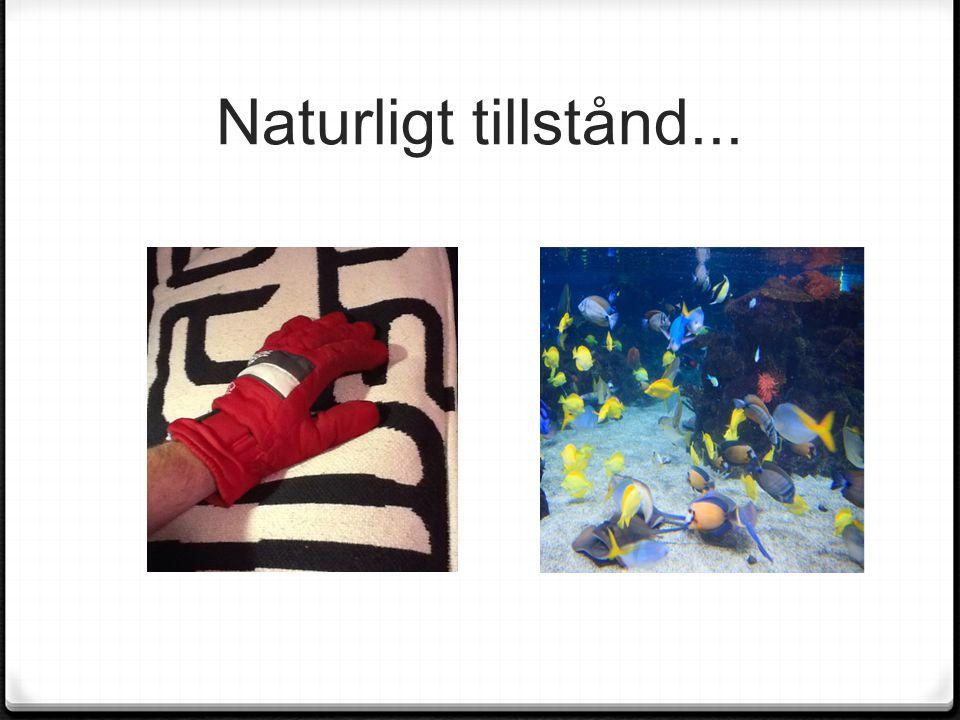 Tack för er uppmärksamhet Niclas Lindfors niclaslindfors.wordpress.com rnklindfors@gmail.com Facebook.