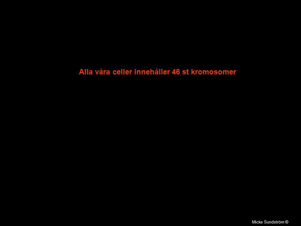 23 par kromosomer En från mamma och en från pappa i varje kromosompar Två av kromosomerna avgör könet Varje kromosom består av en DNA molekyl Micke Sundström ©