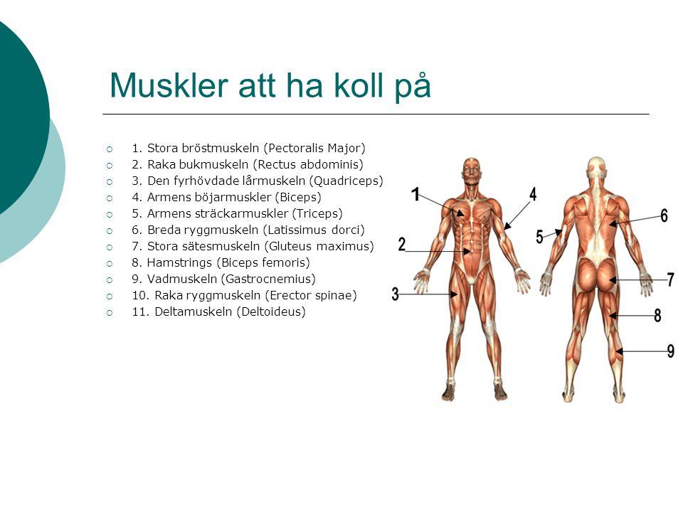 Muskler att ha koll på  1. Stora bröstmuskeln (Pectoralis Major)  2. Raka bukmuskeln (Rectus abdominis)  3. Den fyrhövdade lårmuskeln (Quadriceps)