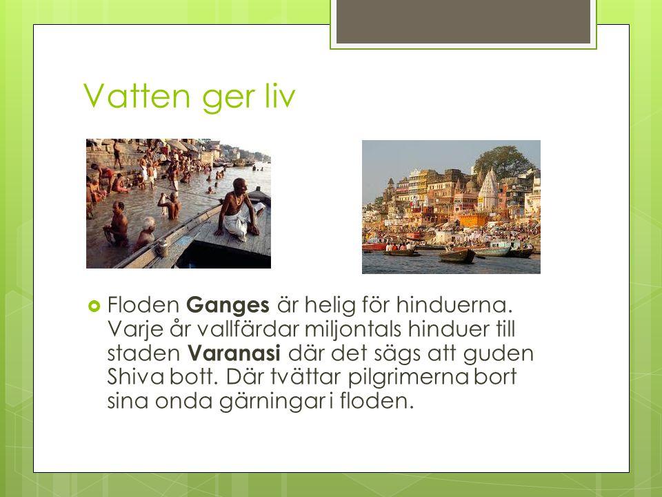 Vatten ger liv  Floden Ganges är helig för hinduerna. Varje år vallfärdar miljontals hinduer till staden Varanasi där det sägs att guden Shiva bott.