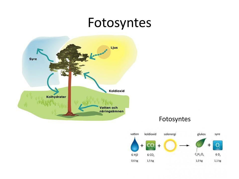 Proteiner Består av långa kedjor av aminosyror.
