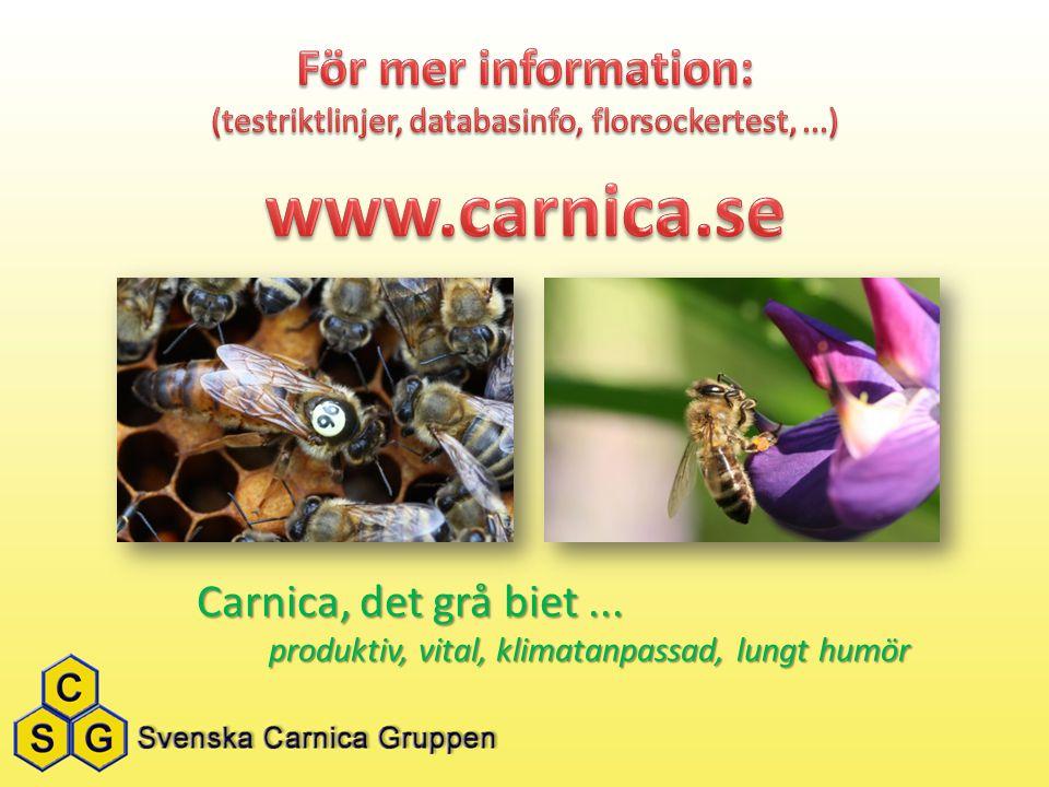 Carnica, det grå biet... produktiv, vital, klimatanpassad, lungt humör produktiv, vital, klimatanpassad, lungt humör