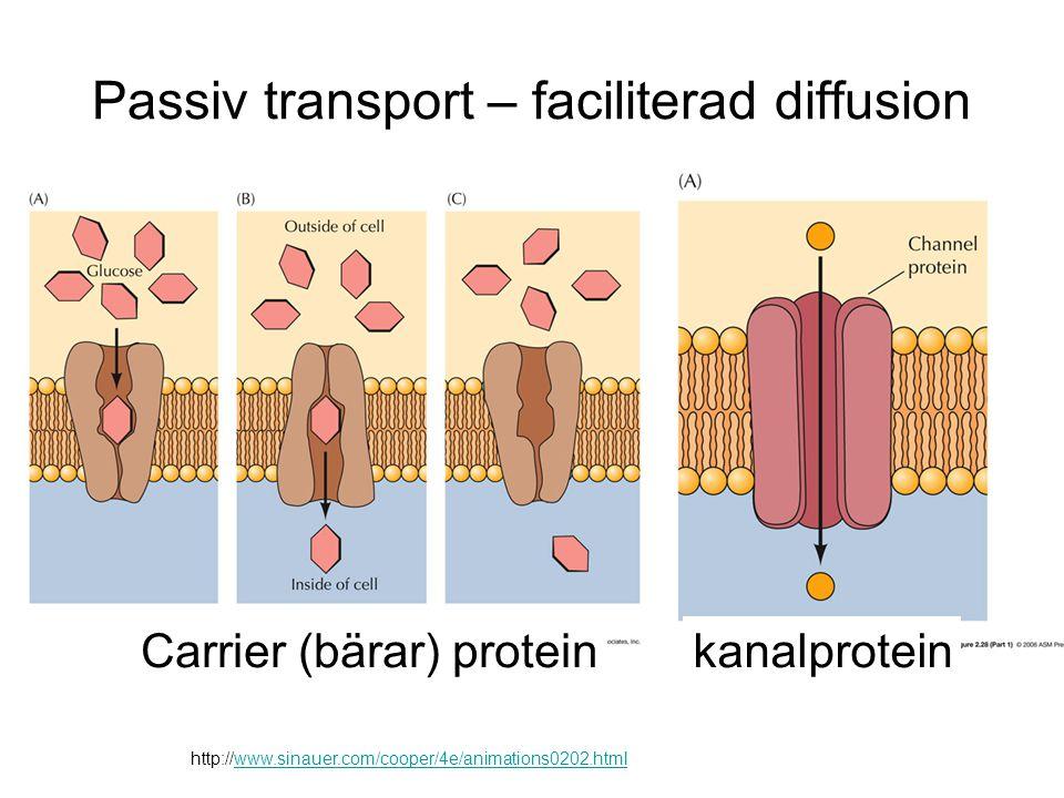 Passiv transport – faciliterad diffusion http://www.sinauer.com/cooper/4e/animations0202.html Carrier (bärar) proteinkanalprotein