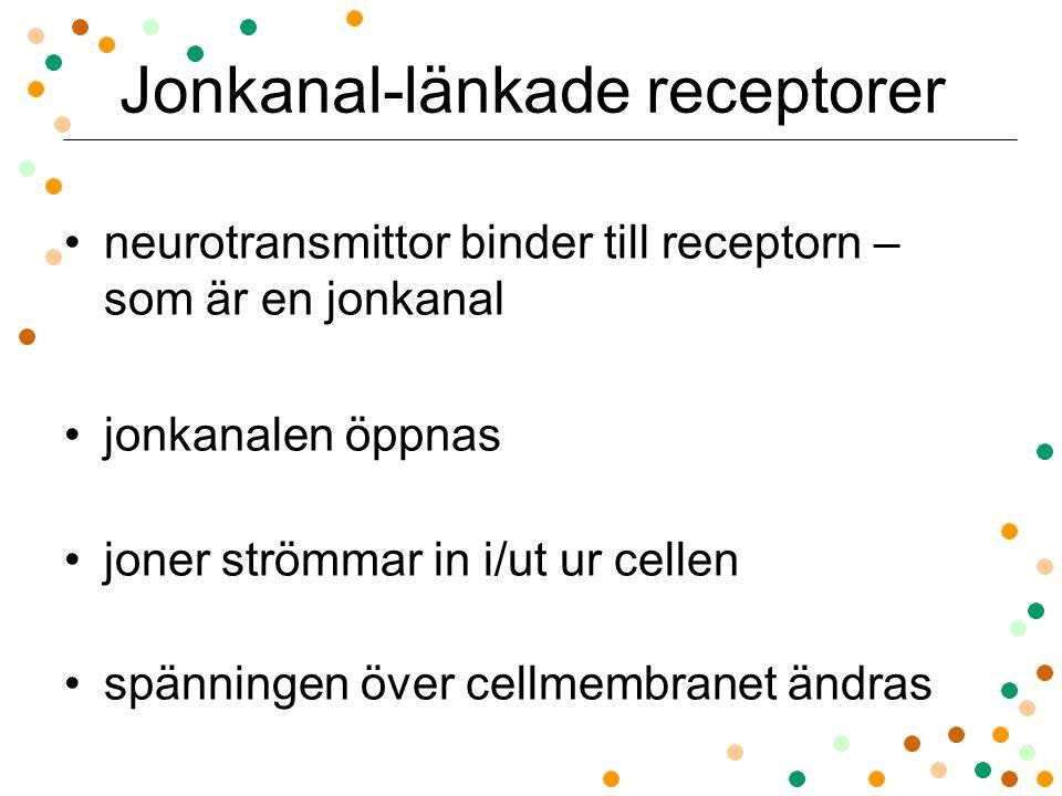 Jonkanal-länkade receptorer neurotransmittor binder till receptorn – som är en jonkanal jonkanalen öppnas joner strömmar in i/ut ur cellen spänningen