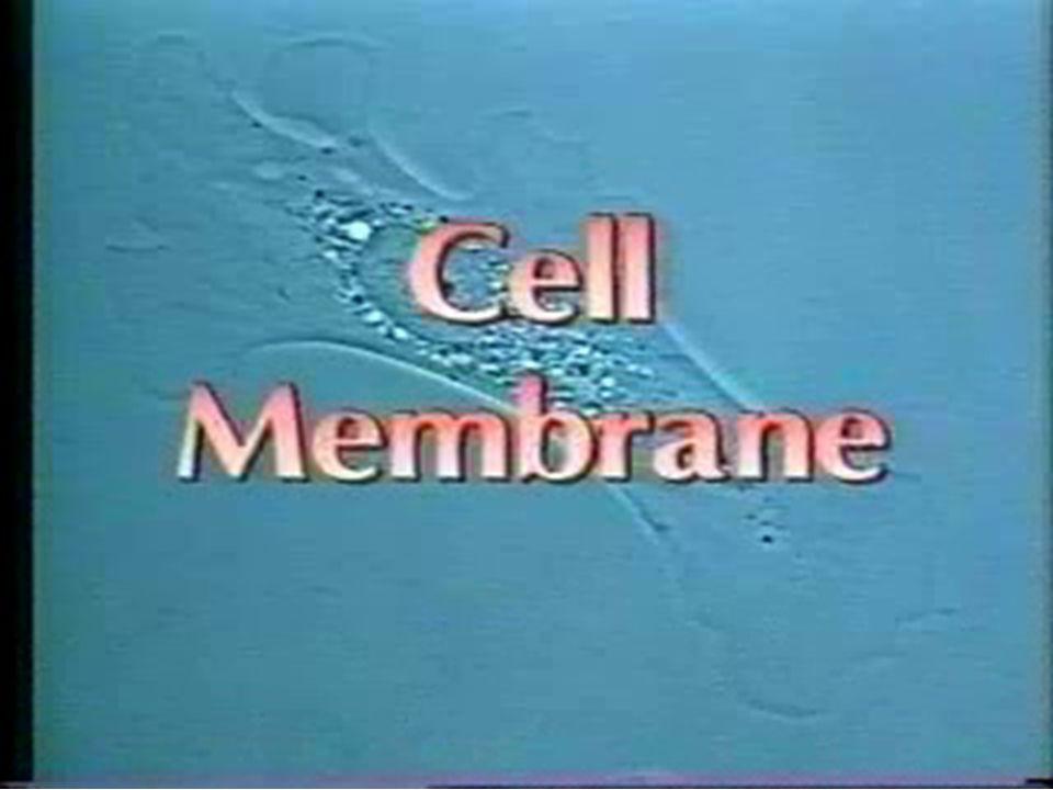 Förankring av icke transmembranproteiner