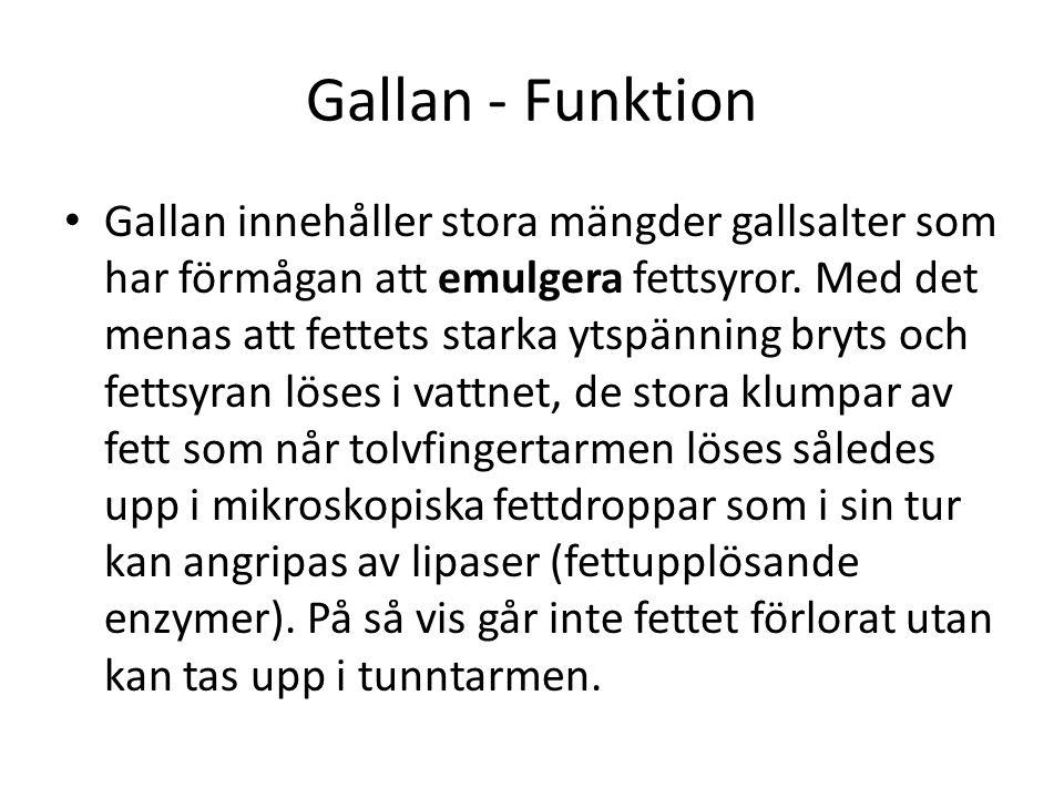 Gallan - Funktion Gallan innehåller stora mängder gallsalter som har förmågan att emulgera fettsyror. Med det menas att fettets starka ytspänning bryt