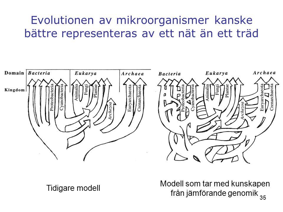 35 Evolutionen av mikroorganismer kanske bättre representeras av ett nät än ett träd Tidigare modell Modell som tar med kunskapen från jämförande geno