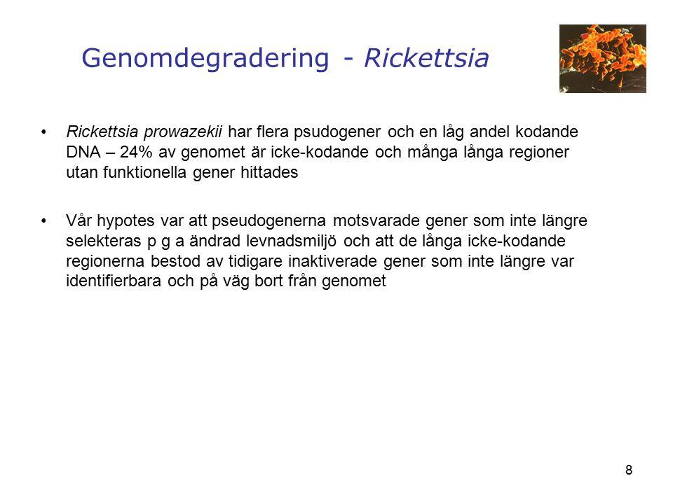 8 Rickettsia prowazekii har flera psudogener och en låg andel kodande DNA – 24% av genomet är icke-kodande och många långa regioner utan funktionella