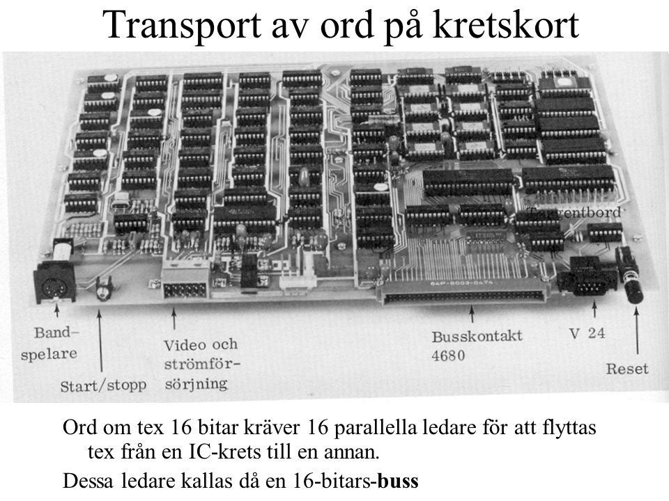 Vanliga busstorlekar 8-bitarsbuss var tidigare vanligast för databussen 16-bitarsbussar är vanligast 32-bitarsbussar är vanliga 64-bitarsbussar förekommer Även större ordlängd förkommer ibland