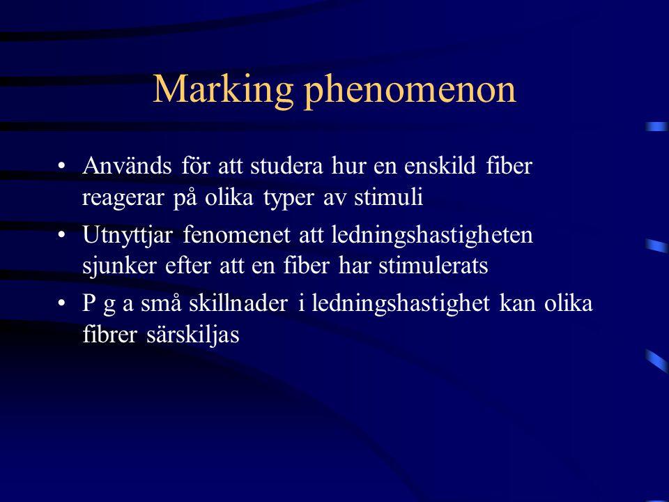 Marking phenomenon Används för att studera hur en enskild fiber reagerar på olika typer av stimuli Utnyttjar fenomenet att ledningshastigheten sjunker efter att en fiber har stimulerats P g a små skillnader i ledningshastighet kan olika fibrer särskiljas