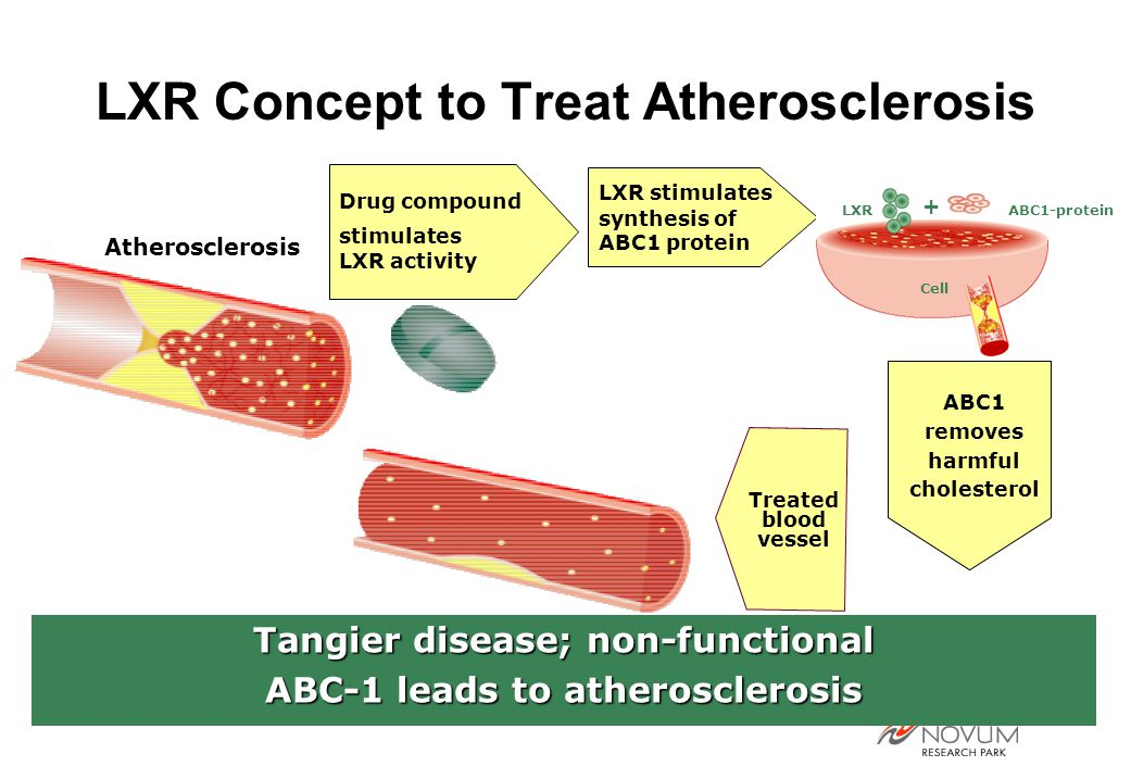 LXR Concept to Treat Atherosclerosis LXR stimulates synthesis of ABC1 protein Drug compound stimulates LXR activity LXR ABC1-protein + Cell Atherosclerosis Tangier disease; non-functional ABC-1 leads to atherosclerosis Treated blood vessel ABC1 removes harmful cholesterol