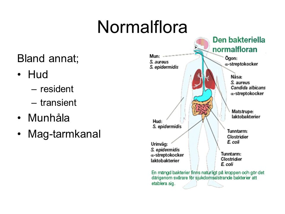 Normalflora Bland annat; Hud –resident –transient Munhåla Mag-tarmkanal