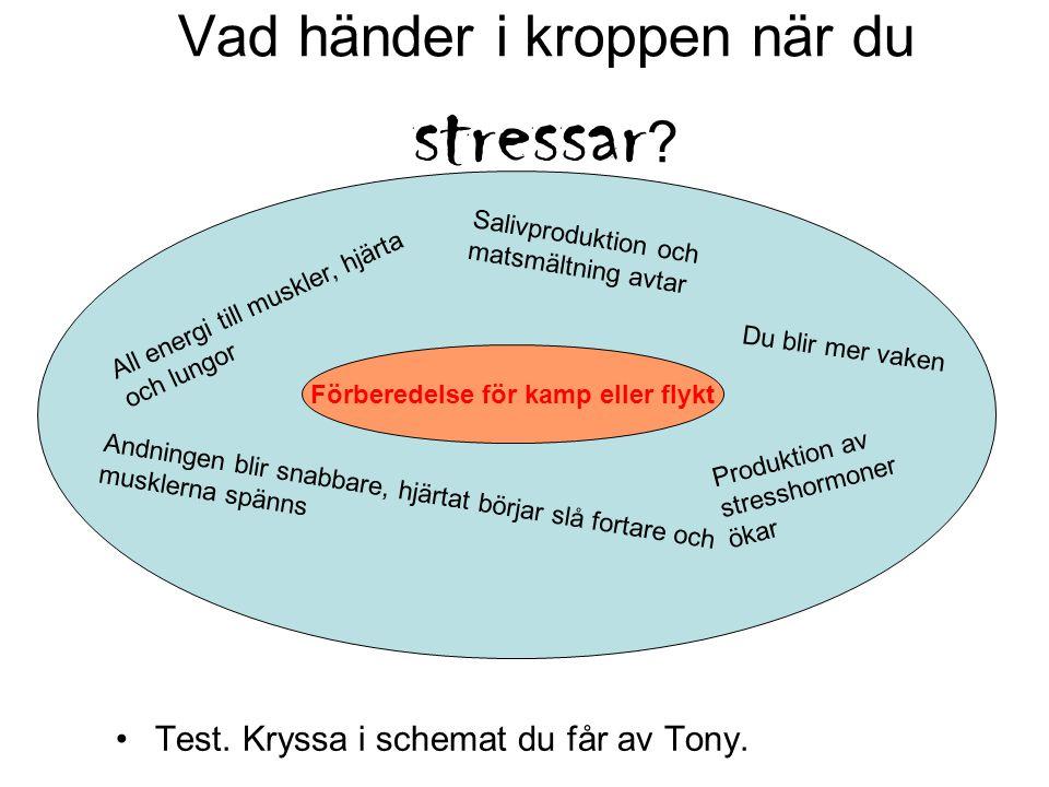 Vad händer i kroppen när du stressar .Test. Kryssa i schemat du får av Tony.