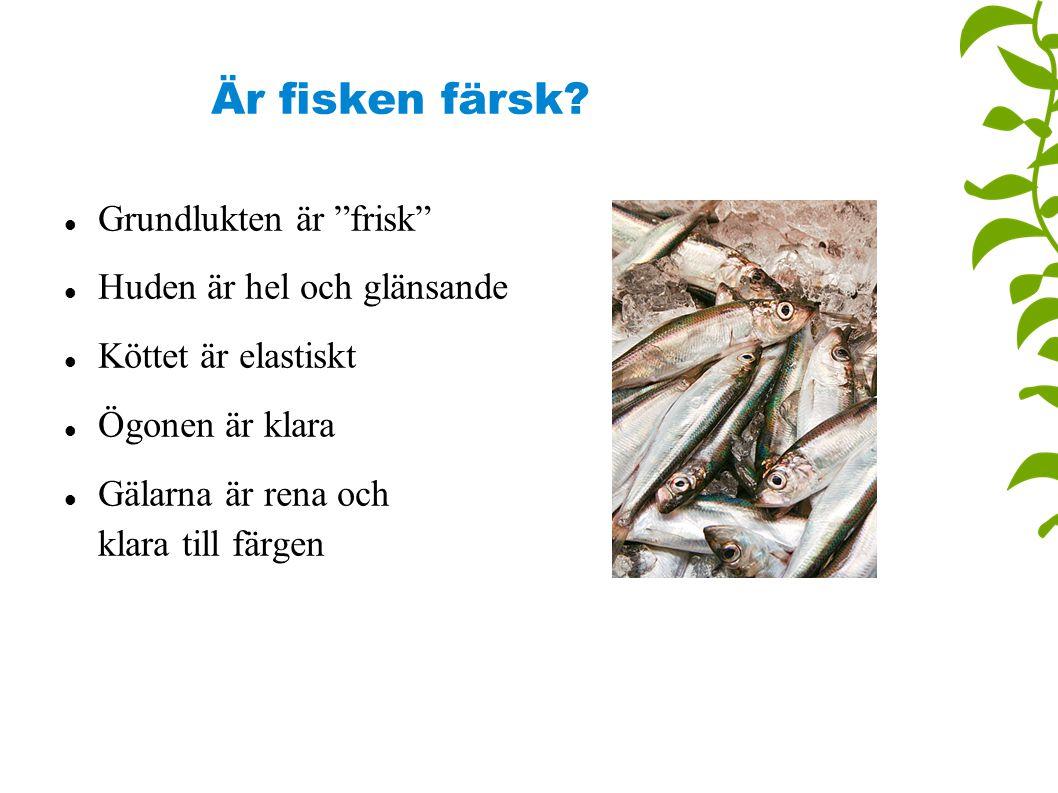 """Är fisken färsk? Grundlukten är """"frisk"""" Huden är hel och glänsande Köttet är elastiskt Ögonen är klara Gälarna är rena och klara till färgen"""
