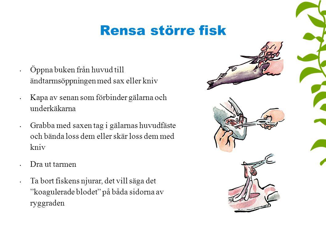 Rensa större fisk Öppna buken från huvud till ändtarmsöppningen med sax eller kniv Kapa av senan som förbinder gälarna och underkäkarna Grabba med sax