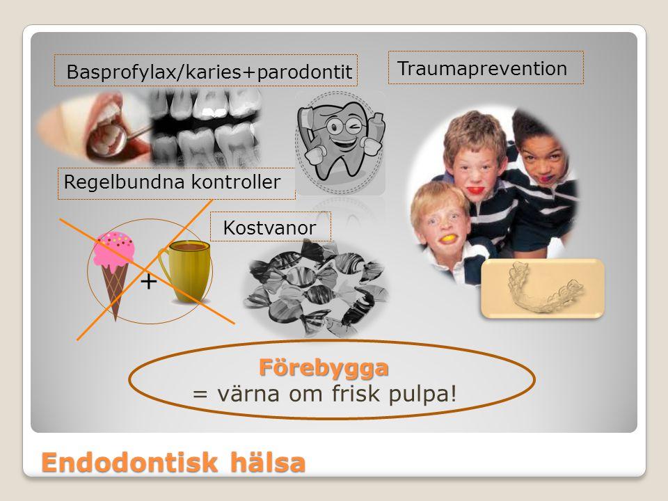 Endodontisk hälsa Förebygga = värna om frisk pulpa! Basprofylax/karies+parodontit Traumaprevention Regelbundna kontroller + Kostvanor