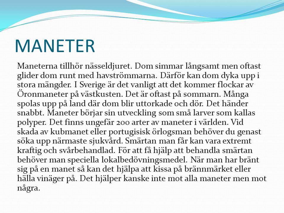 MANETER Maneterna tillhör nässeldjuret. Dom simmar långsamt men oftast glider dom runt med havströmmarna. Därför kan dom dyka upp i stora mängder. I S