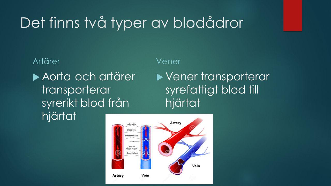 Det finns två typer av blodådror Artärer  Aorta och artärer transporterar syrerikt blod från hjärtat Vener  Vener transporterar syrefattigt blod till hjärtat