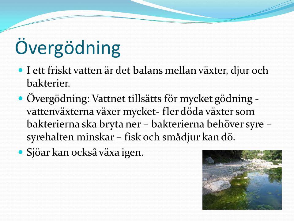 Övergödning I ett friskt vatten är det balans mellan växter, djur och bakterier. Övergödning: Vattnet tillsätts för mycket gödning - vattenväxterna vä