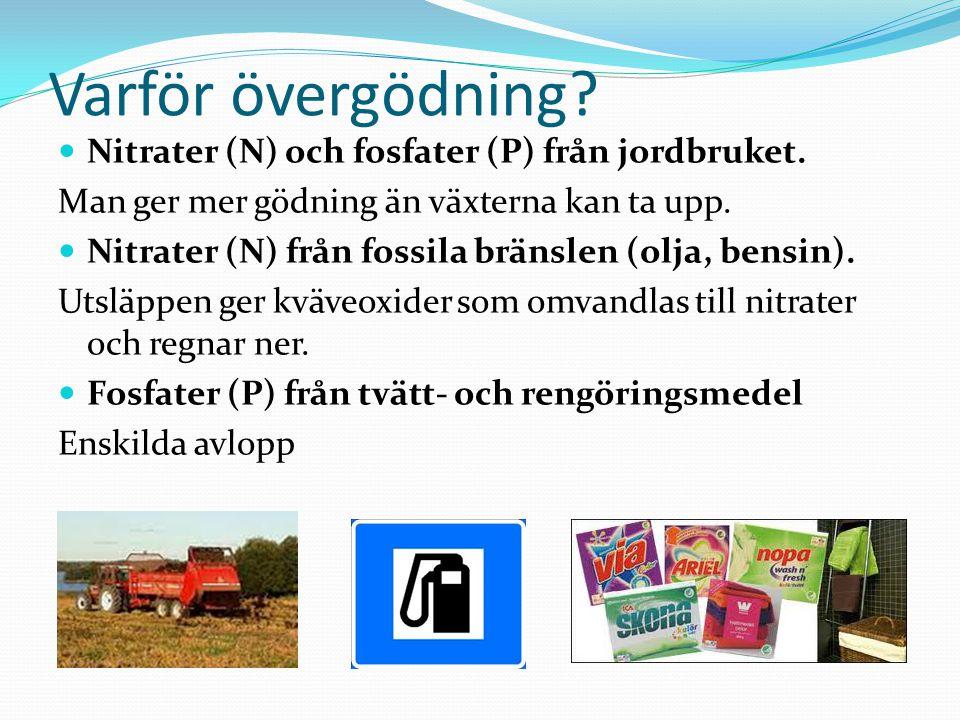 Varför övergödning? Nitrater (N) och fosfater (P) från jordbruket. Man ger mer gödning än växterna kan ta upp. Nitrater (N) från fossila bränslen (olj