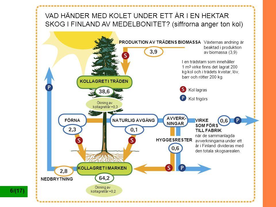6/(17) VAD HÄNDER MED KOLET UNDER ETT ÅR I EN HEKTAR SKOG I FINLAND AV MEDELBONITET? (siffrorna anger ton kol) PRODUKTION AV TRÄDENS BIOMASSA KOLLAGRE