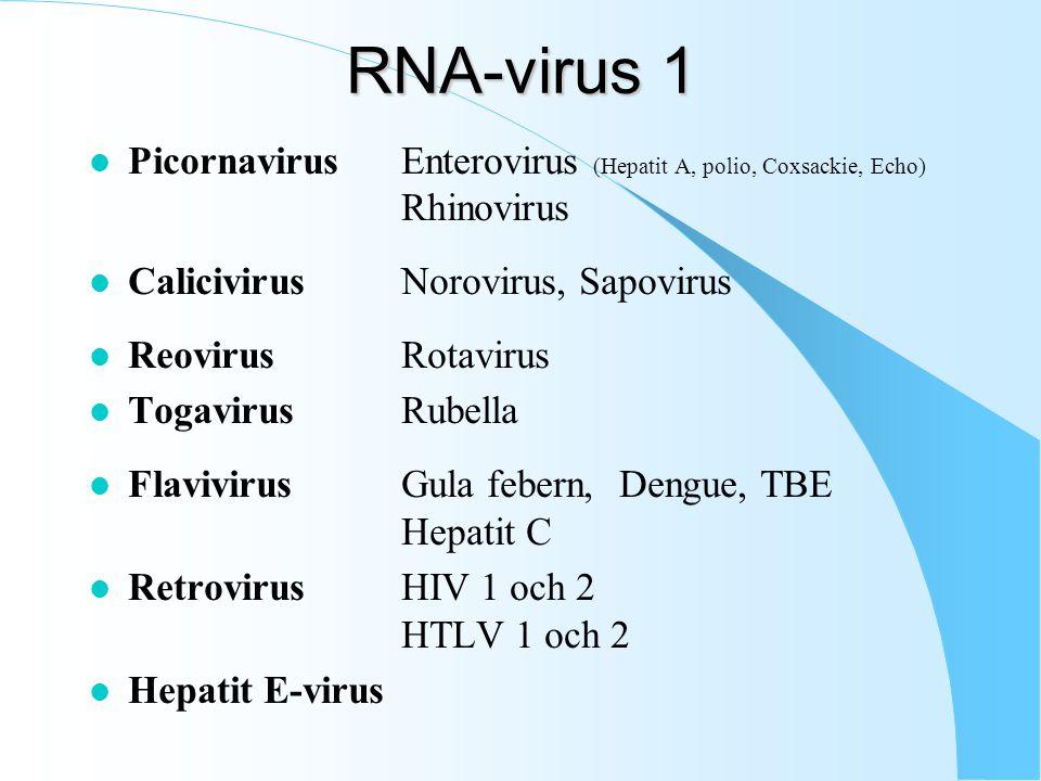 RNA-virus 1 l PicornavirusEnterovirus (Hepatit A, polio, Coxsackie, Echo) Rhinovirus l CalicivirusNorovirus, Sapovirus l ReovirusRotavirus l TogavirusRubella l FlavivirusGula febern, Dengue, TBE Hepatit C l RetrovirusHIV 1 och 2 HTLV 1 och 2 l Hepatit E-virus