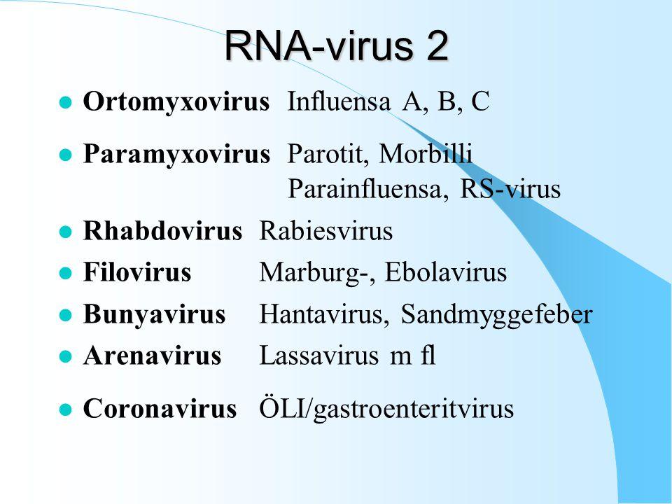 RNA-virus 2 l Ortomyxovirus Influensa A, B, C l Paramyxovirus Parotit, Morbilli Parainfluensa, RS-virus l RhabdovirusRabiesvirus l FilovirusMarburg-, Ebolavirus l BunyavirusHantavirus, Sandmyggefeber l ArenavirusLassavirus m fl l CoronavirusÖLI/gastroenteritvirus