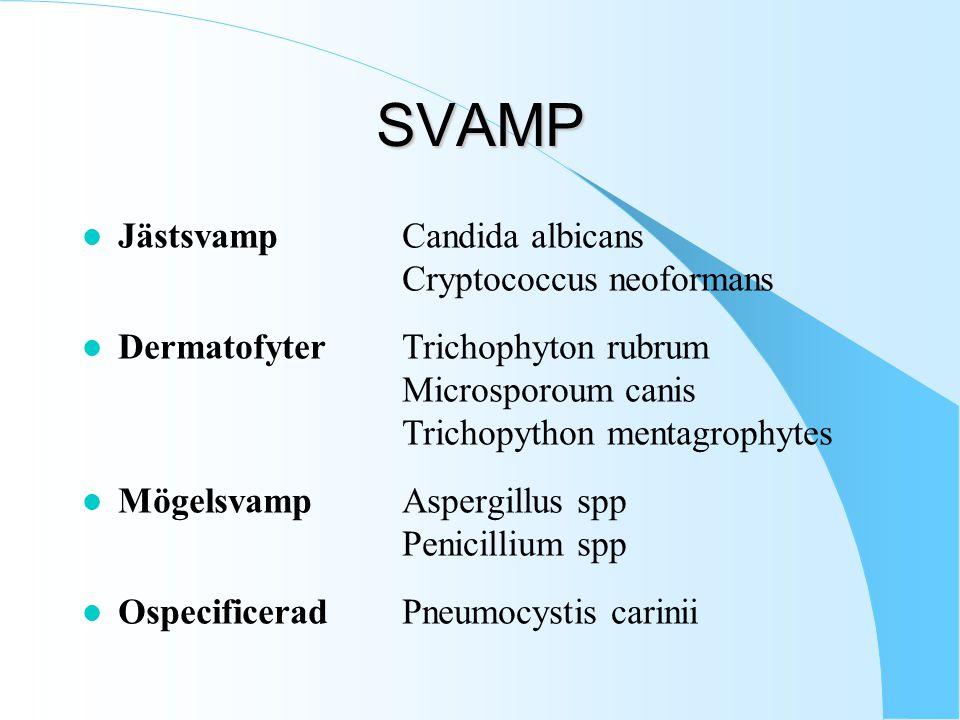 SVAMP l JästsvampCandida albicans Cryptococcus neoformans l DermatofyterTrichophyton rubrum Microsporoum canis Trichopython mentagrophytes l MögelsvampAspergillus spp Penicillium spp l OspecificeradPneumocystis carinii